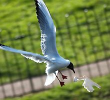Seagull catching bread by ejrphotography