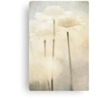 Summer Of Yellow Flowers Canvas Print