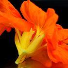 Ballet des Fleurs II by SmoothBreeze7