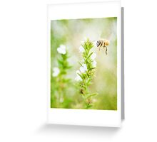 Winter savory and bee in garden Greeting Card