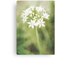 Garlic chives Canvas Print