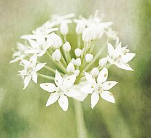 Garlic chives by Artmassage