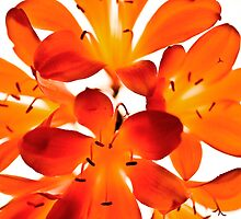 Oranje Glow. by Andrew Bosman