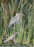 Blue Heron by J-C Saint-Pô