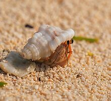 The Colourful Hermit!!! by SalilSahani