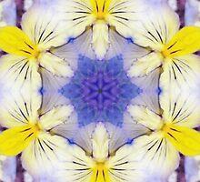 Transcendent Violas by SRowe Art