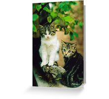Family Portrait of Cats. Greeting Card