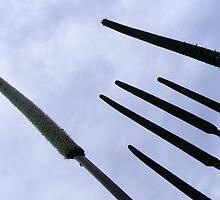 spears by ajax