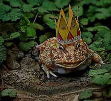 The Frog King by Terry Doyle