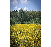Yellow Flower Field in Spring Photographic Print