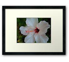 White Beauty Framed Print