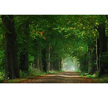 The first touch of autumn in laneland Photographic Print
