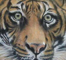 Tiger by Valerie Simms
