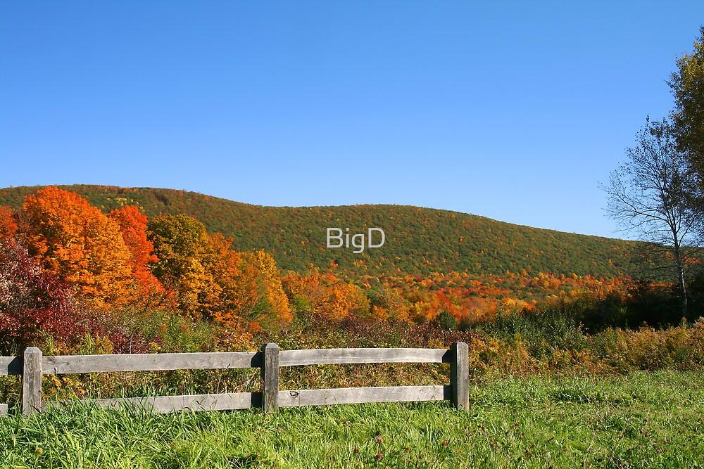 Nature's Overlook by BigD