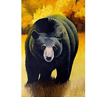 Black Bear In Autumn Photographic Print