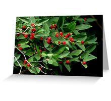 Red Berries Greeting Card