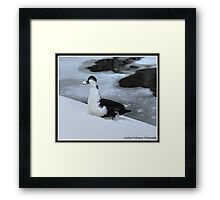 Snow On My Bill Framed Print