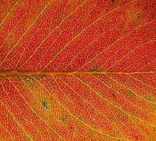 Autumn colours 3 by Nenad Kostadinovic