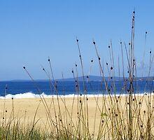 Grasses at Tura Beach by Melva Vivian