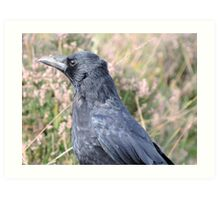 Bore Black Feathers Art Print