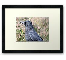 Bore Black Feathers Framed Print
