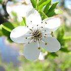 Blossom by Elena Skvortsova