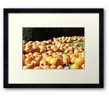 Pumpkin Patch in the Sun Framed Print