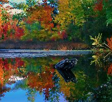 Many colors of New England by LudaNayvelt