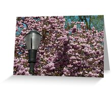 Cherry Blossoms and a Lamp Post Greeting Card