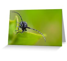 Unknown Insect Greeting Card