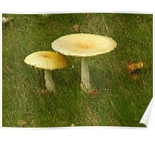 TOAD STOOL AND DESK Poster