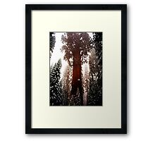 """General Sherman"" Sequoia National Park California Framed Print"