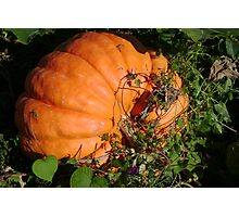 In the Pumpkin Patch Photographic Print