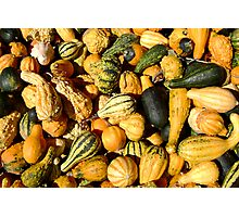 Gorgeous Gourds Photographic Print