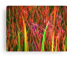 Cattail grasses enhanced Canvas Print