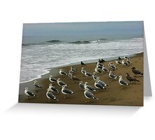 Gulls on Morning Watch. Greeting Card