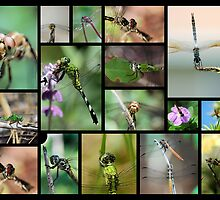 Dragonfly Collage I by Donna Adamski