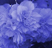 Blossoms in Blue by Sharon Stevens