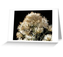 Wintry Feathers Greeting Card