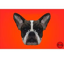 LowPoly Bulldog Photographic Print