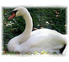 Yes, Zoe ... It's a Swan!! Poster
