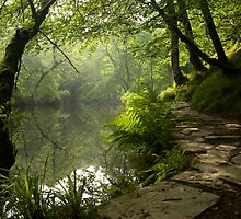 A Light unto my path by DonDavisUK