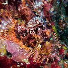 Blended Scorpionfish by Michael Powell