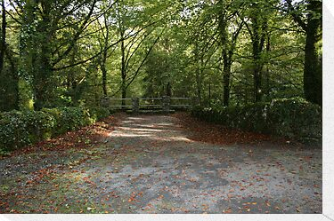 Coole Park wood by John Quinn