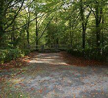 Coole Park wood by John Quinn