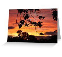 Setting sun in the bush. Greeting Card