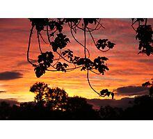 Setting sun in the bush. Photographic Print