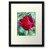 One for the Ladies Framed Print