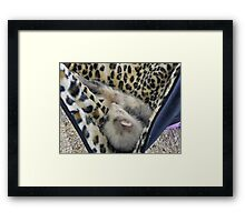 FERRET DREAMS Framed Print
