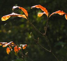 Turning Leaves by SWEEPER